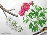 4Mayflowersblogpic copy