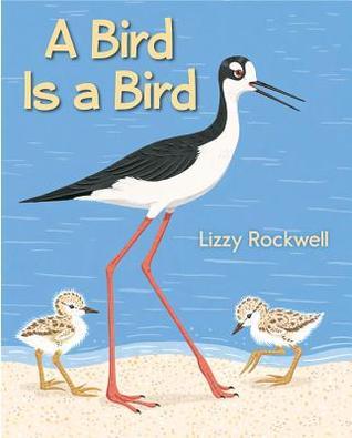 bird-is-a-bird